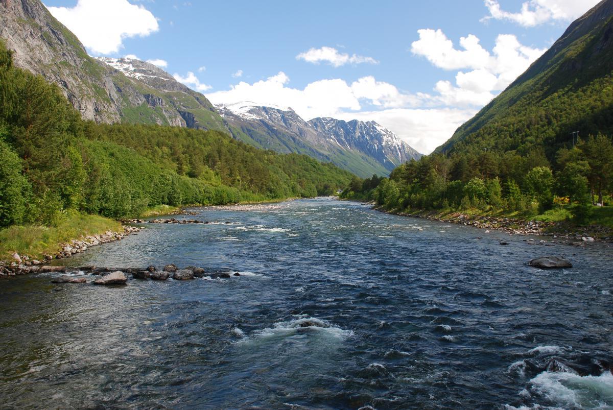 Regal ja Norvise perhonsidontatuotteet